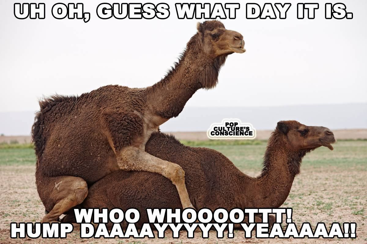 Happy Hump Day Hump Day Humor Funny Animal Pictures Naughty Humor
