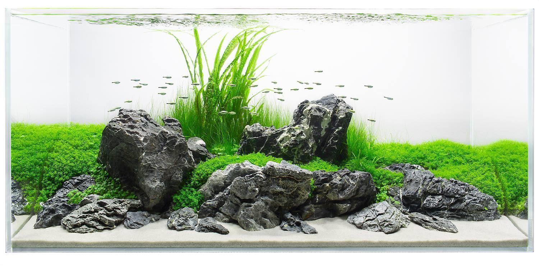 Stunning Aquascape Design Ideas 60 Aquascape Design Aquarium Landscape Aquarium Design