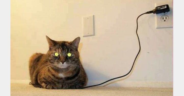 見てはいけないものを見てしまった(笑)!充電中のネコ 9枚 | BUZZmag