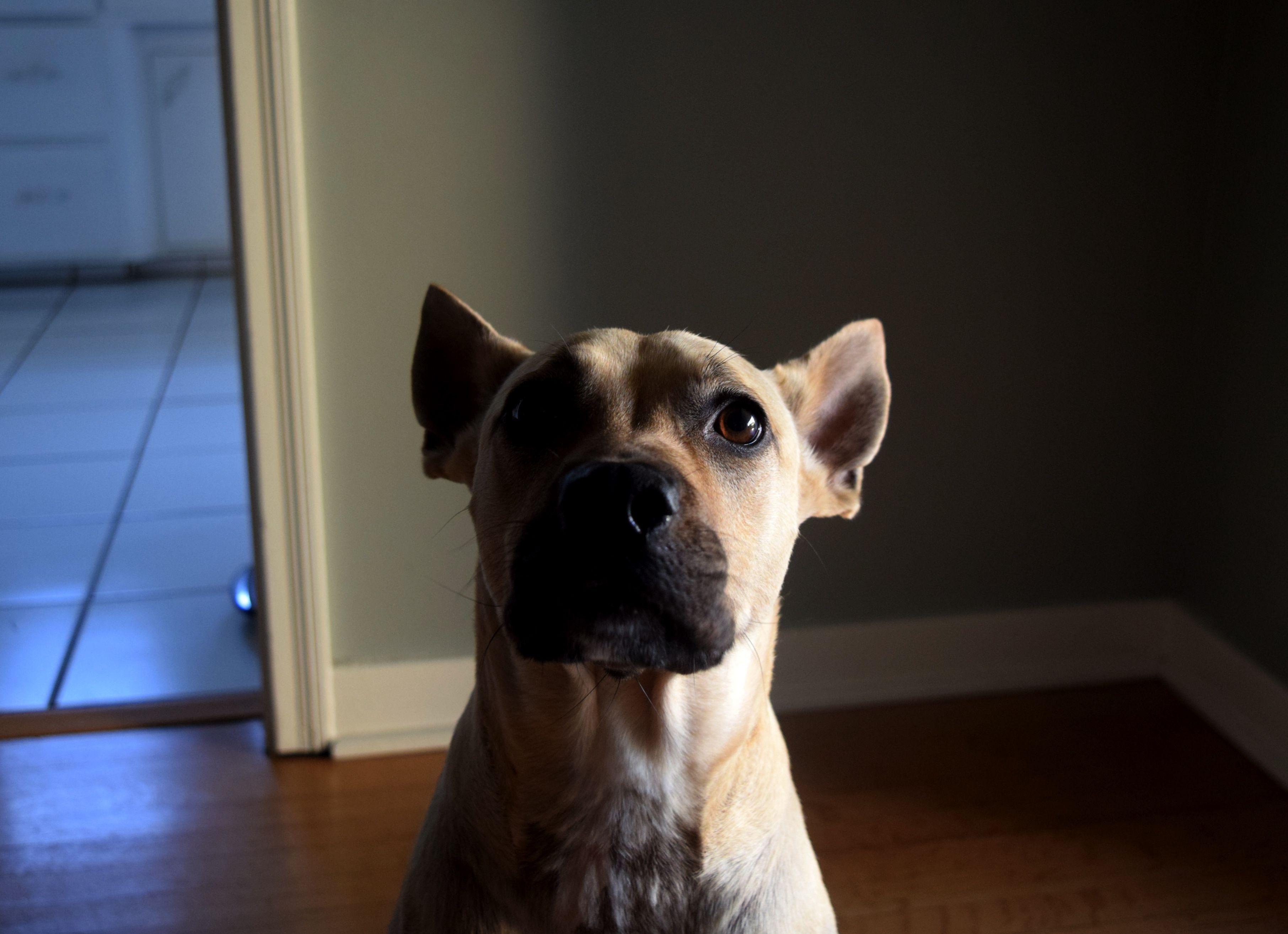 Craigslist West Los Angeles Pets - WAYANGPETS.COM