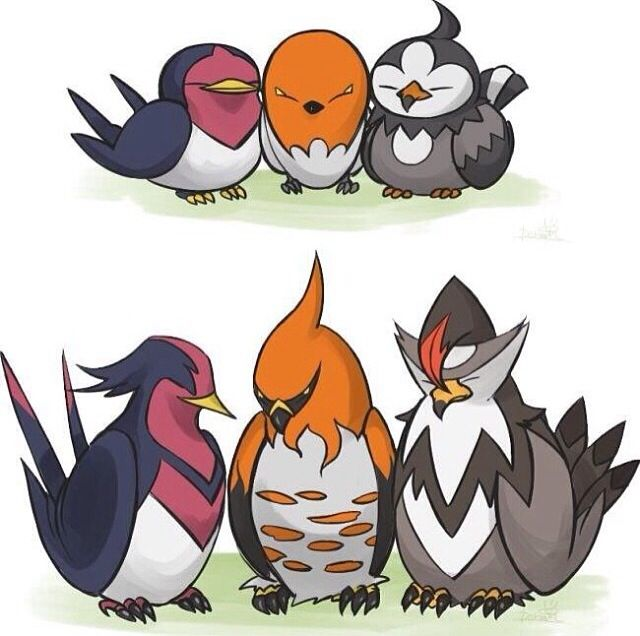 Taillow Swellow Fletchling Talonflame Starly Staraptor