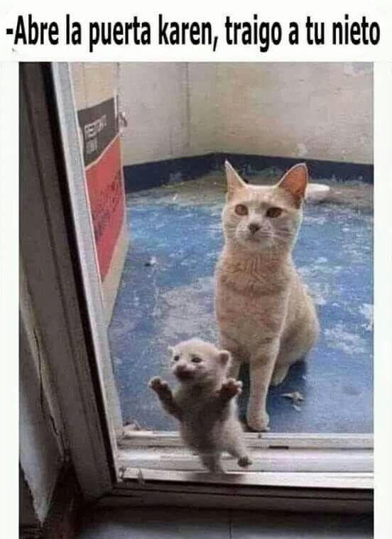 Pin De Fifty En Memes Graciosos Memes Graciosos De Animales Memes De Animales Divertidos Memes Divertidos