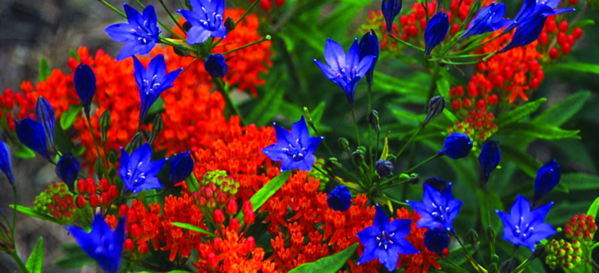 Colors don\'t get more vibrant than this! | Blooms we LOVE ...