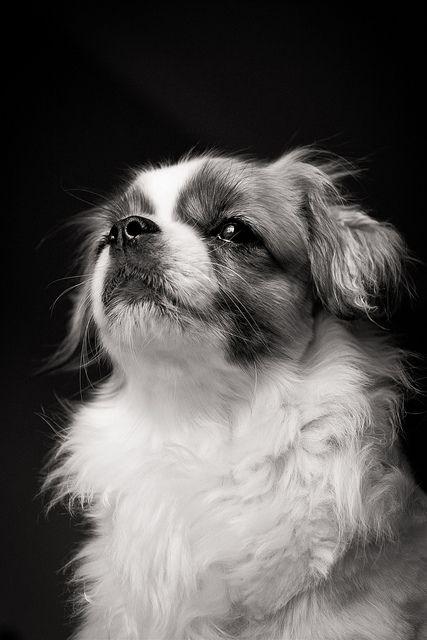 Barry Dog Breath Dog Breeds Spaniel Dog