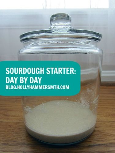 DIY Sourdough Starter Day by Day Pinterest Starters Food and