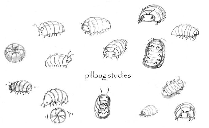 Pill Bug Coloring Page