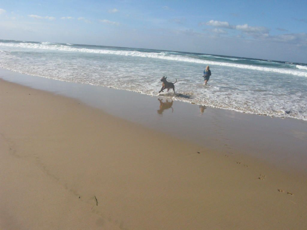 Frei Stehen Am Strand Der Westalgarve Praia Da Cordoama Mojobuslife Algarve Strand Reisen