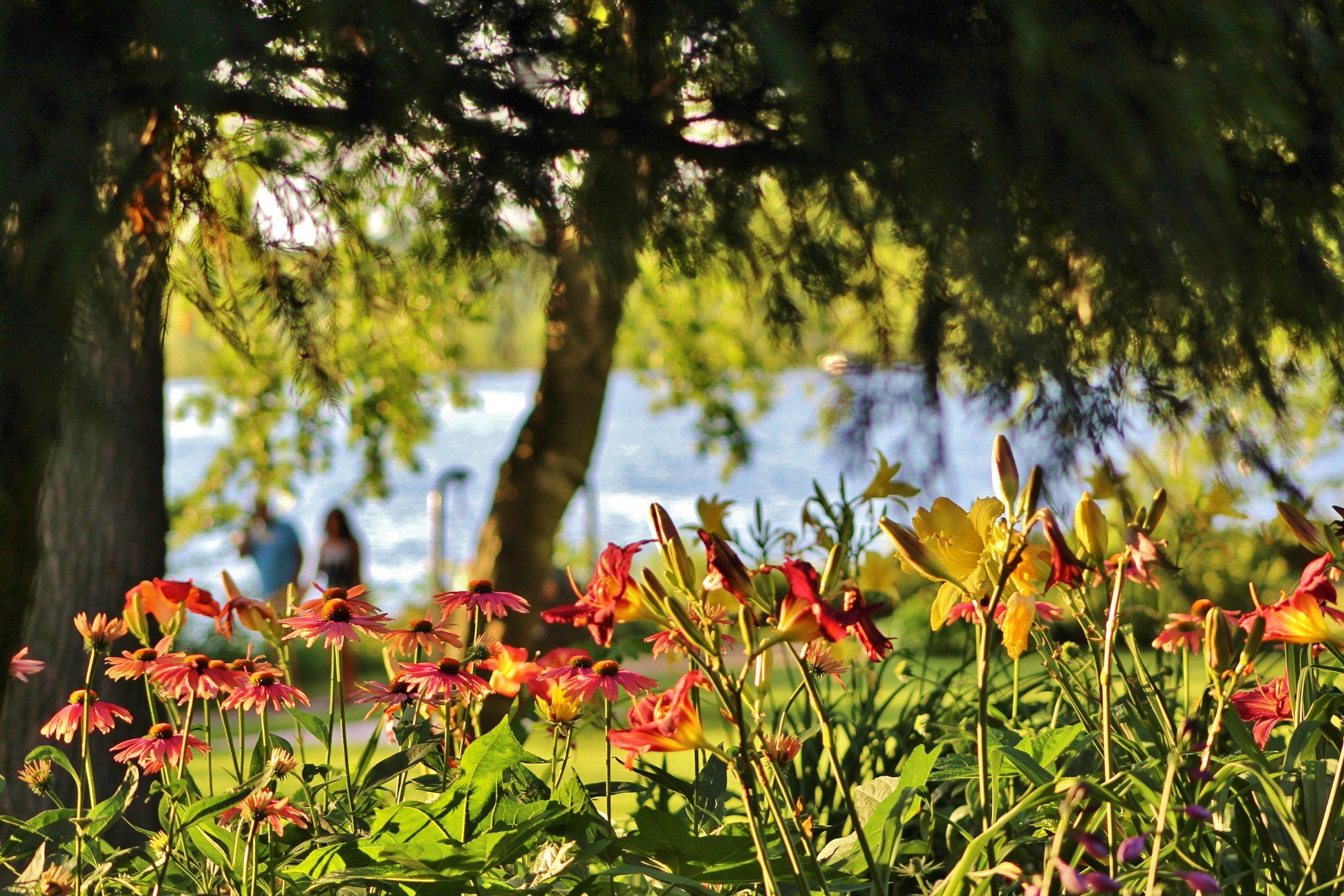 c688ce8ff31d93ed1965b8feabe85db4 - Munsinger Gardens In St Cloud Minnesota