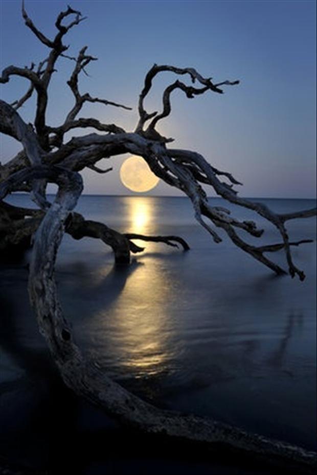 luna sobre el agua y árbol seco inclinado
