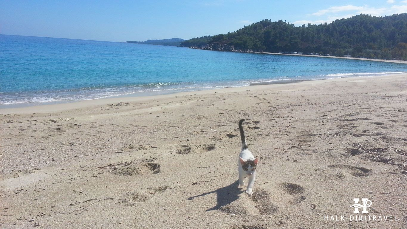 A kitten in Armenistis Beach  #Halkidiki # Armenistis