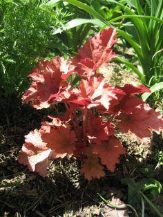 Rosliny Do Cienia Plants Garden Bedroom Design