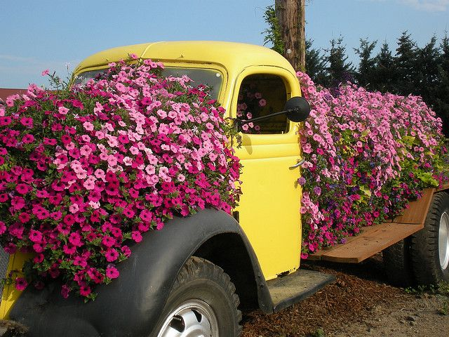 Petunia Planter Petunia Planter Backyard Design Outdoor Planters