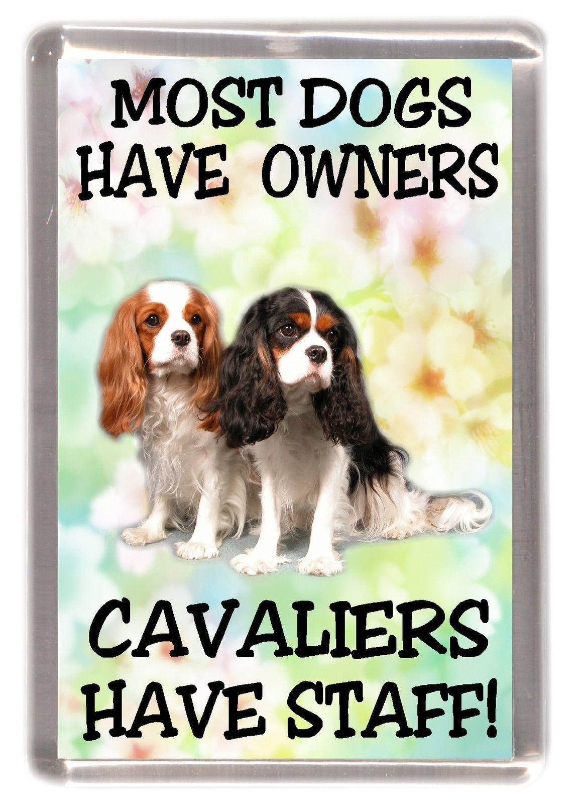CAVALIER KING CHARLES SPANIEL Property Laws FRIDGE MAGNET No 4