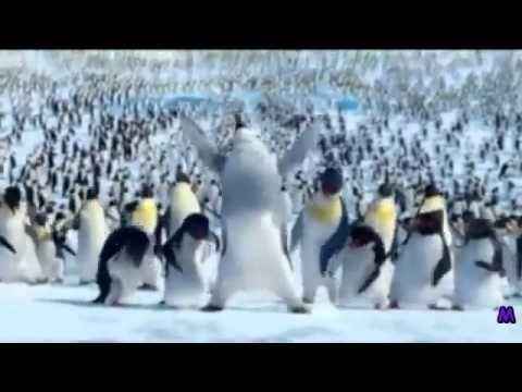 The Penguin Song Happy Birthday Alles Gute Zum Geburtstag Lieder