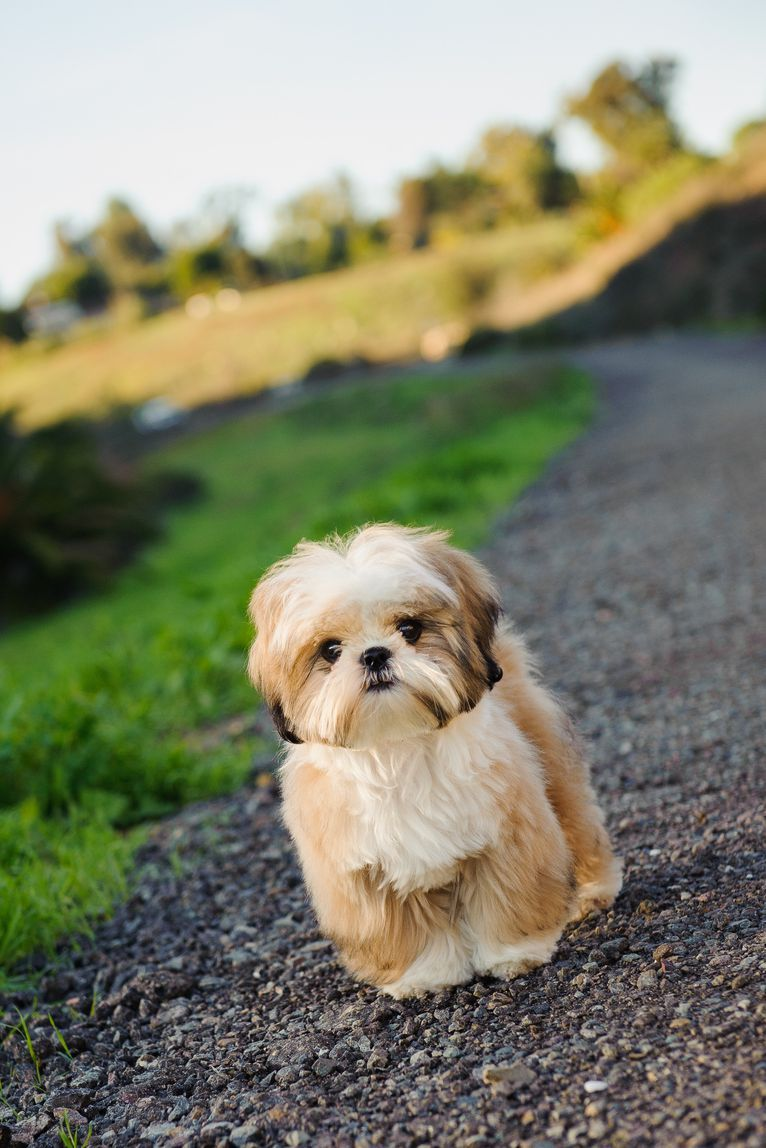 Cute Dog Breeds Like A Maltese That Won T Shed All Over Your House Puppies Dog Breeds