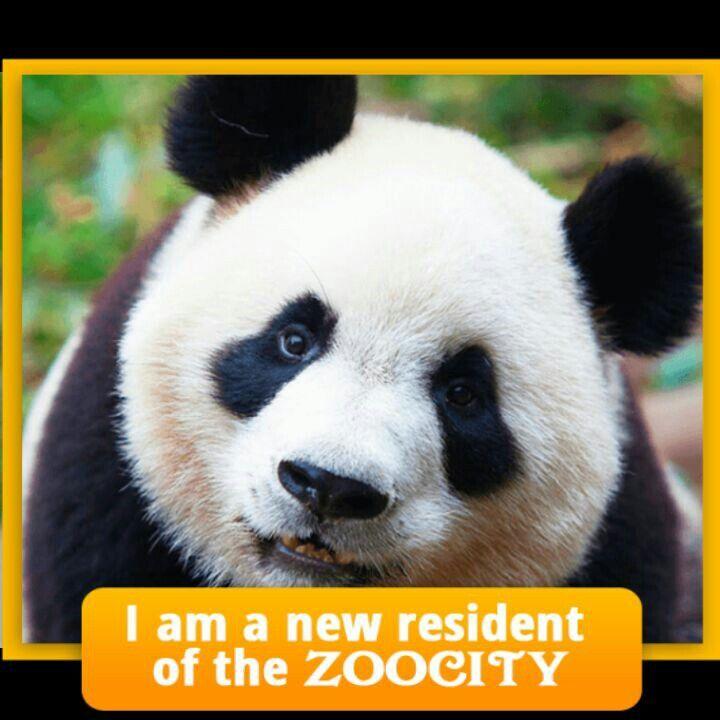 Payton the Panda