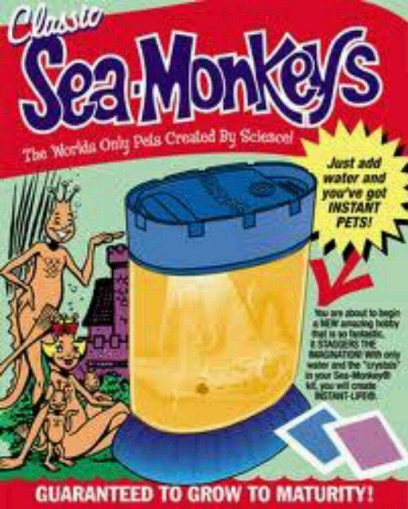 Sea Monkeys Sea Monkeys Toys R Us Kids Childhood Days