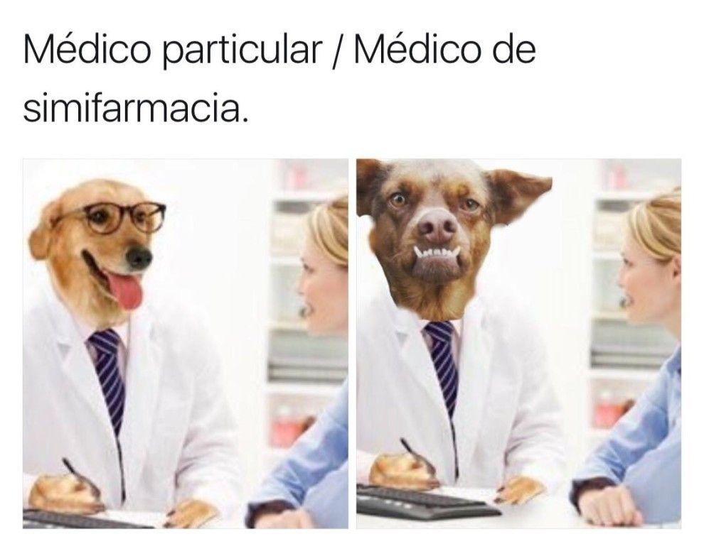 Estos 21 Memes Del Doctor Perro Son La Cura Para Todos Tus Males Memes Perros Doctor
