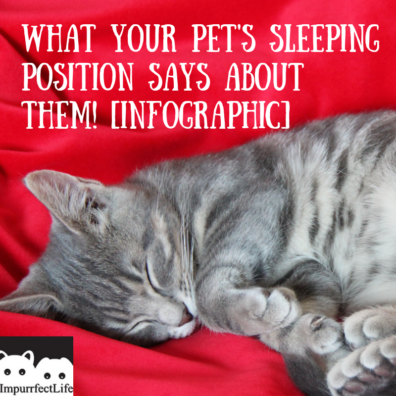 What Your Pet S Sleeping Position Says About Them Cat Sleeping Positions Dog Sleeping Positions Pets
