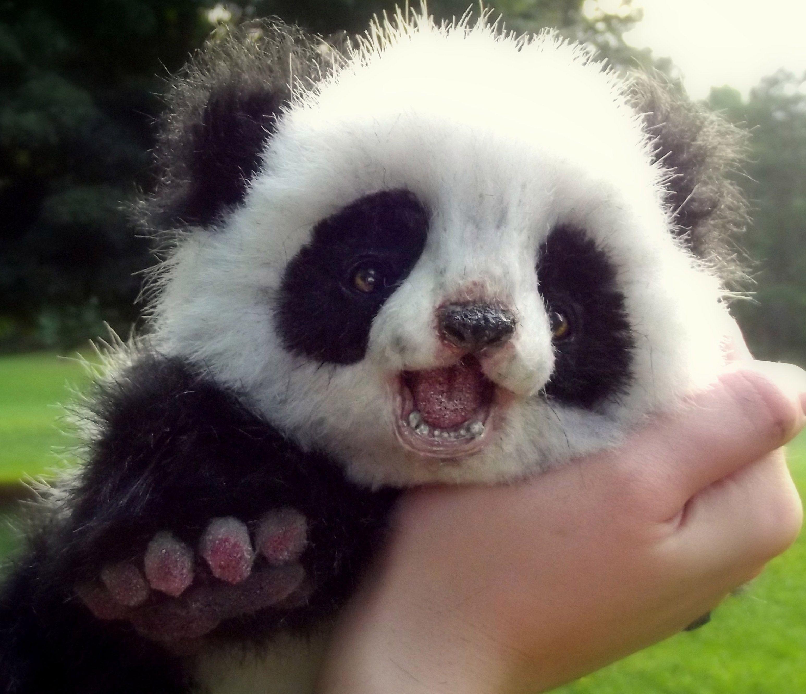 Cute Animal Wallpapers, Hd Wild Life Photos, Best Friends