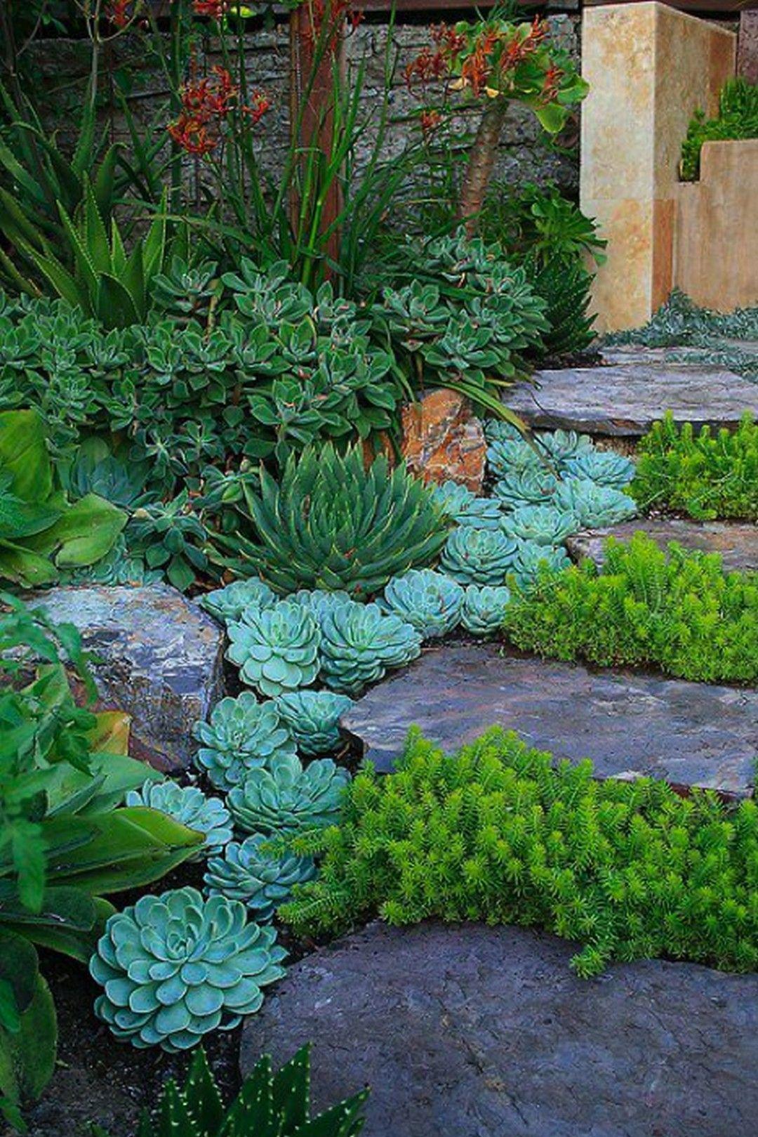 44 Beautiful Indoor And Outdoor Succulent Plants Ideas Beautiful