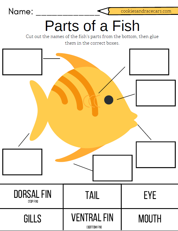 Parts of a Fish worksheet from the Fish Worksheet Pack. Free ...