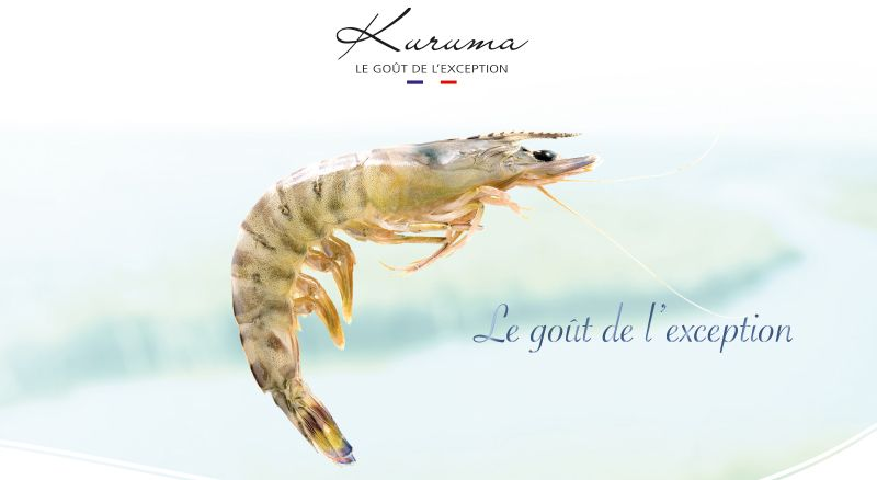 Aquaprawna launches the new #Kuruma #shrimp from Charentes Maritime, a French product of exception