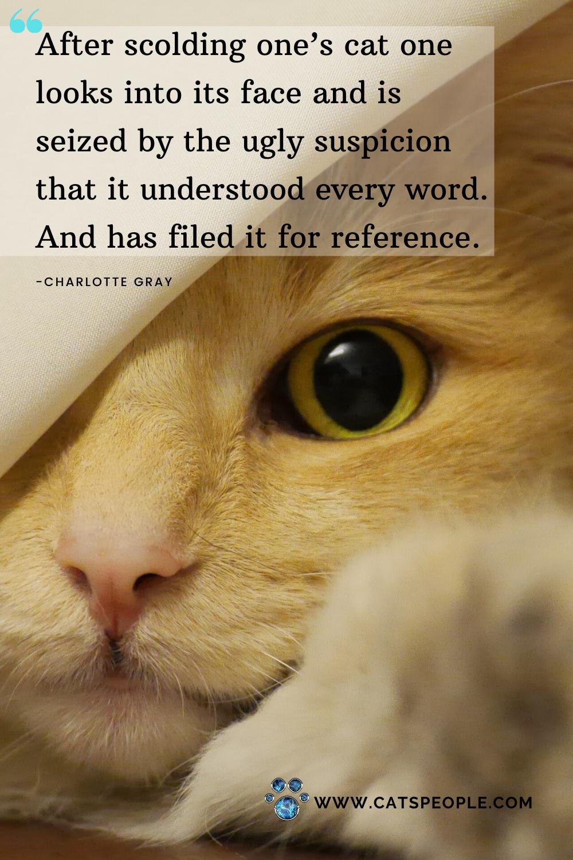 Funny Cat Quote Cat Quotes Funny Cat Quotes Cats
