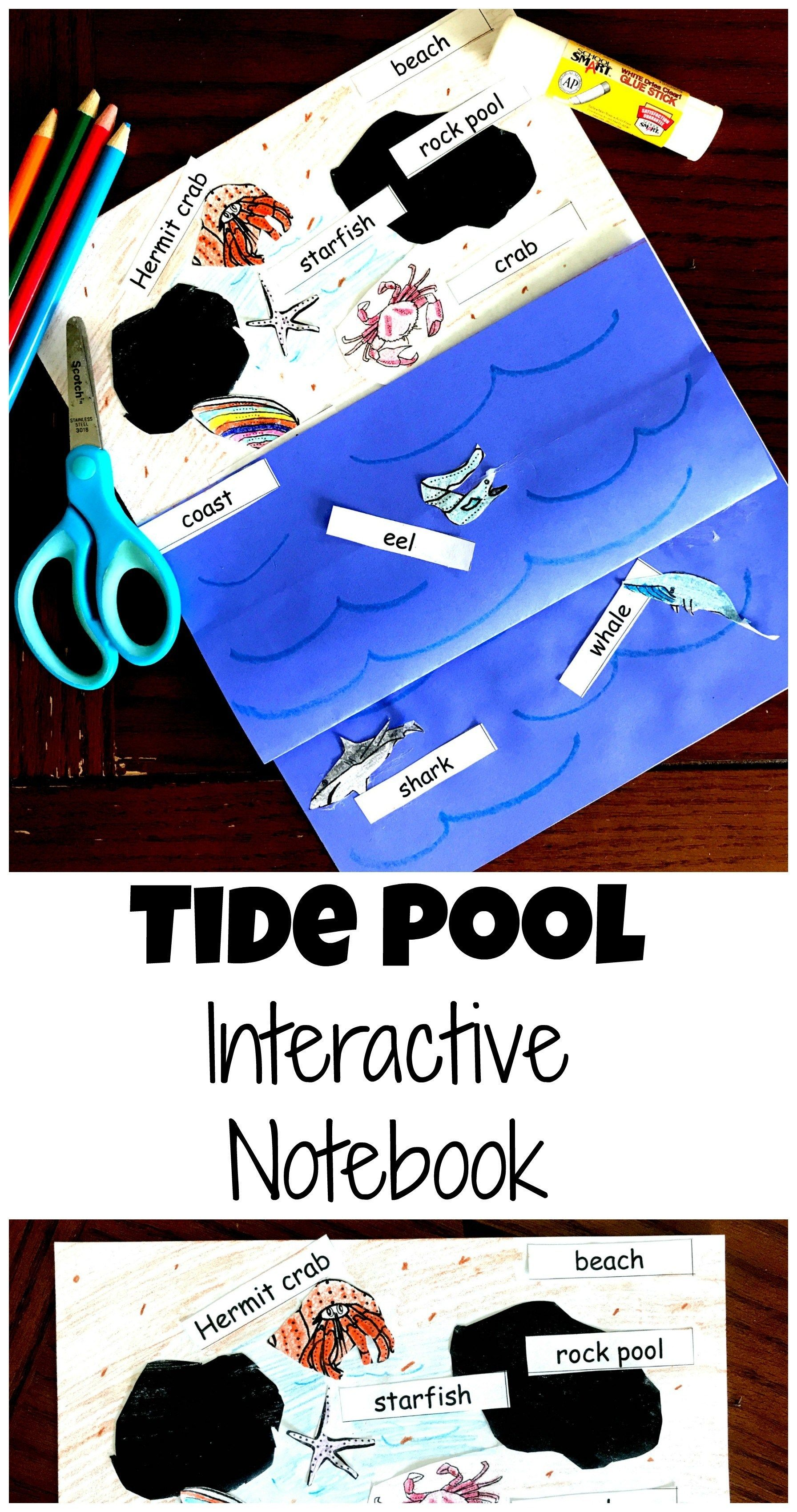 Here S A Free Tide Pool Interactive Notebook Perfect For K