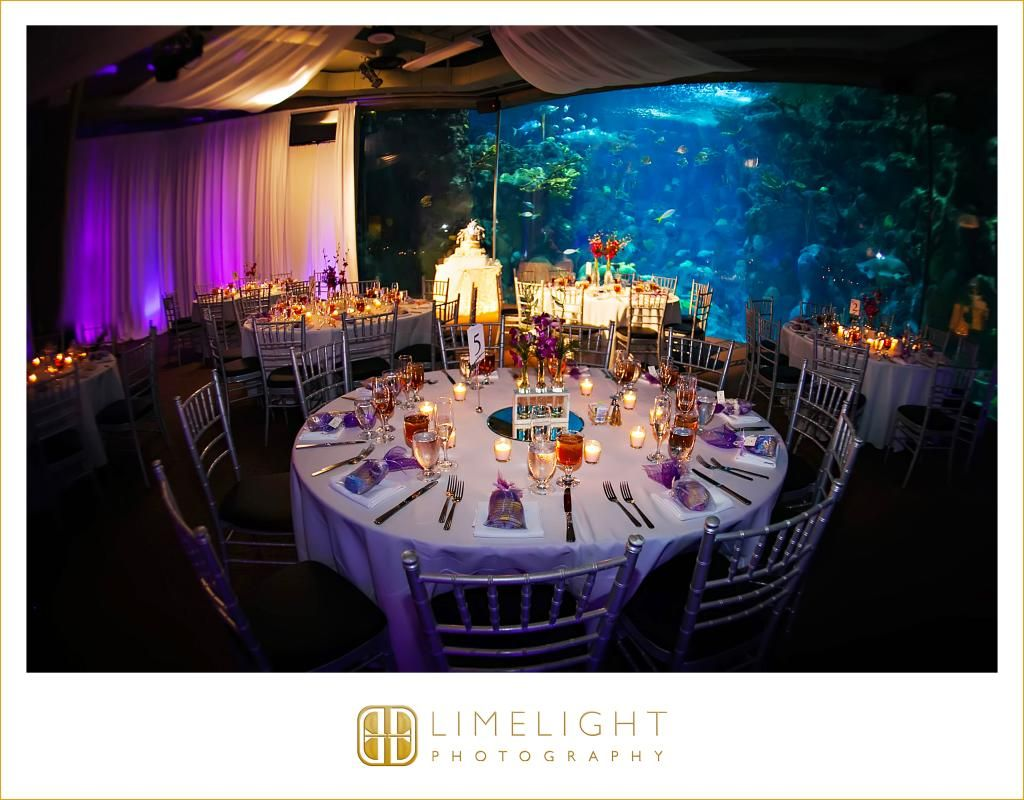 FLORIDA AQUARIUM, www.stepintothelimelight.com, wedding, wedding photography, reception, wedding day, aquarium wedding, portrait, lace, wedding dress, Tampa, Florida, Florida wedding