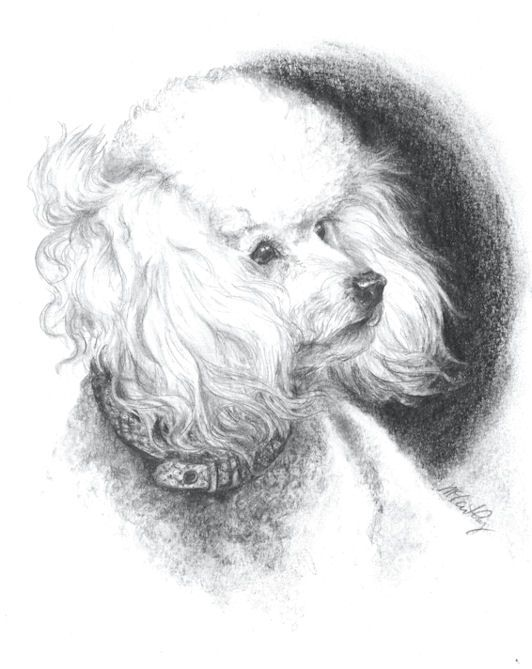 Poodle In The Wind Charcoal Drawing Via Nancy Mccarthycom Ideas