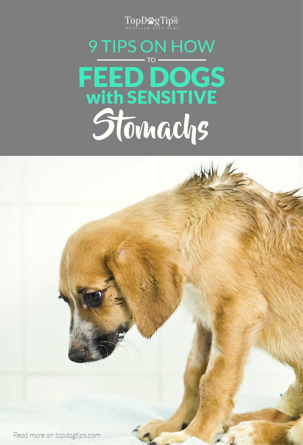 9 Tips On Feeding Dogs With Sensitive Stomachs Dog Nutrition 101