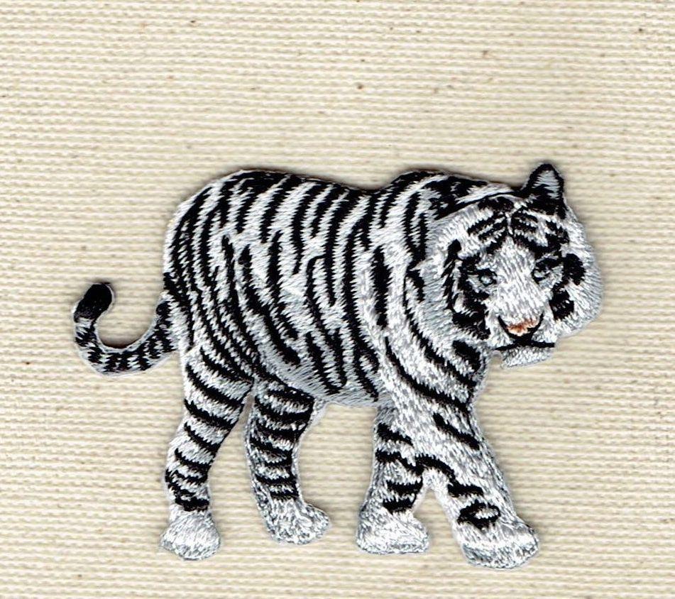 White Bengal Tiger Natural Full Body Walking Right