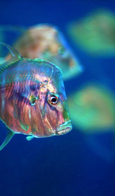 Nature Blogger I Love Mother Nature Ocean Creatures Sea Animals Ocean Animals