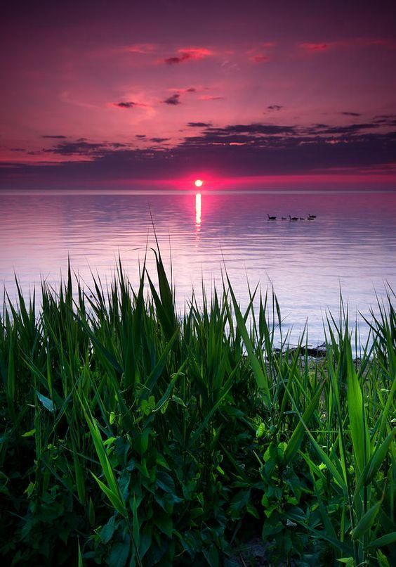 Geese at Sunrise Lake St. Clair (between Ontario Canada and Michigan) Cale Best Art Photography