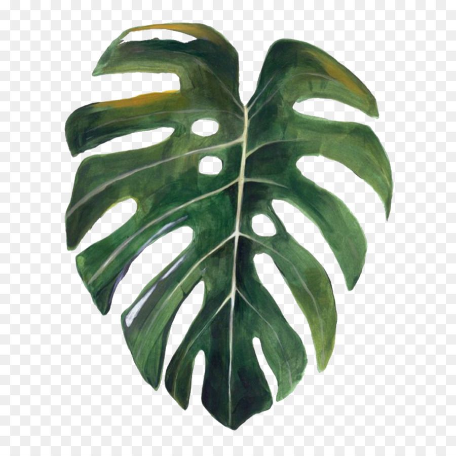 Swiss Cheese Plant Leaf Drawing Google Search Plant Drawing Leaf Drawing Watercolor Plants