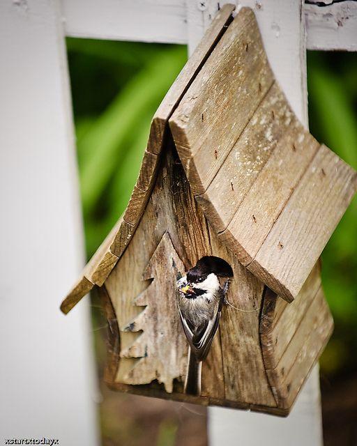 Cute Small House Designs: Chickadee+Bird+House+Plans