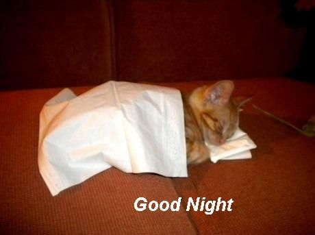 funny good night compicturesfunnyanimalpictures