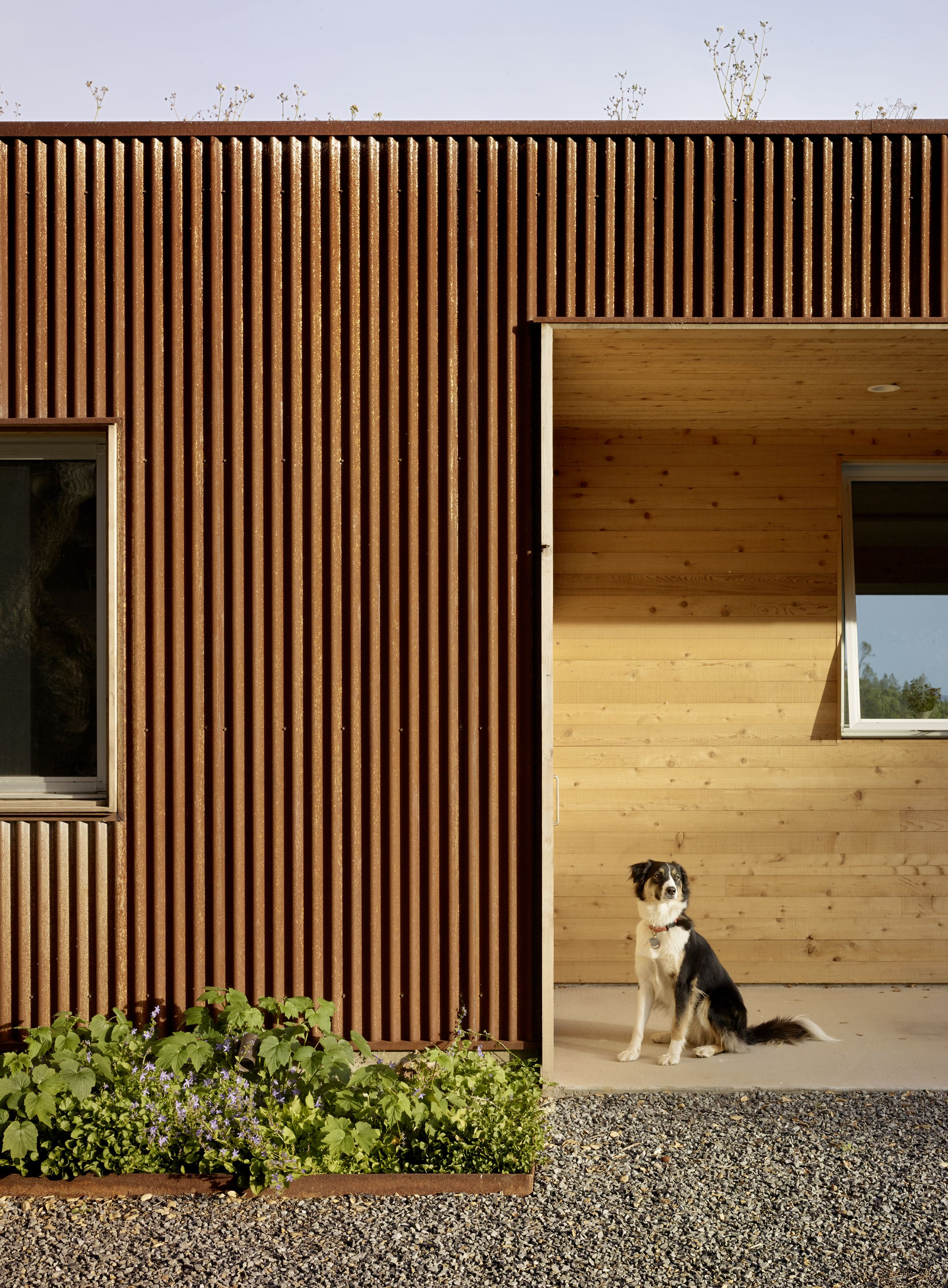 Corten corrugated metal wall reclaimed redwood panel wall living roof cloverdale residence turnbull griffin haesloop