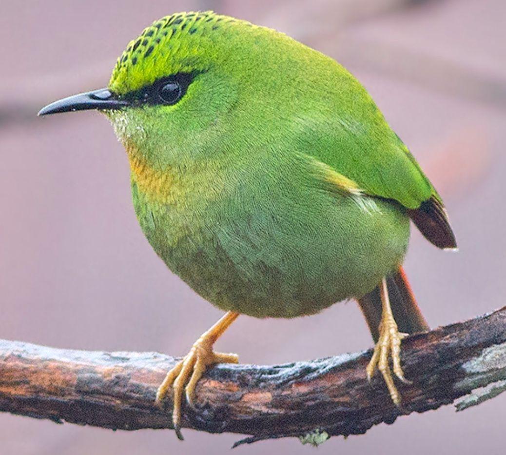 Pin on H Birds
