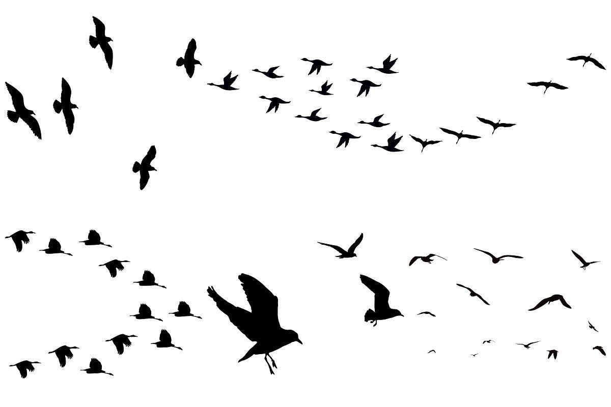 Flock Of Birds Overlay Ai Eps Png Graphic Illustration Flock Of Birds Card Making Kids