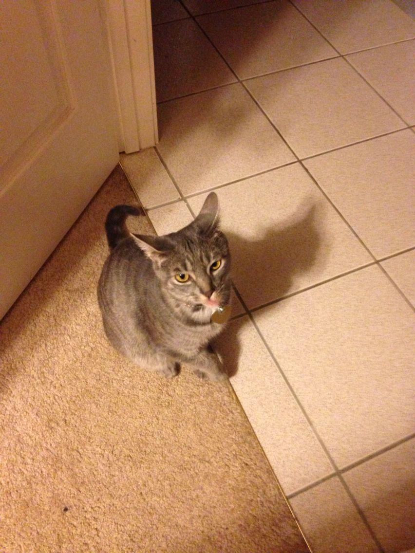 My fav cat