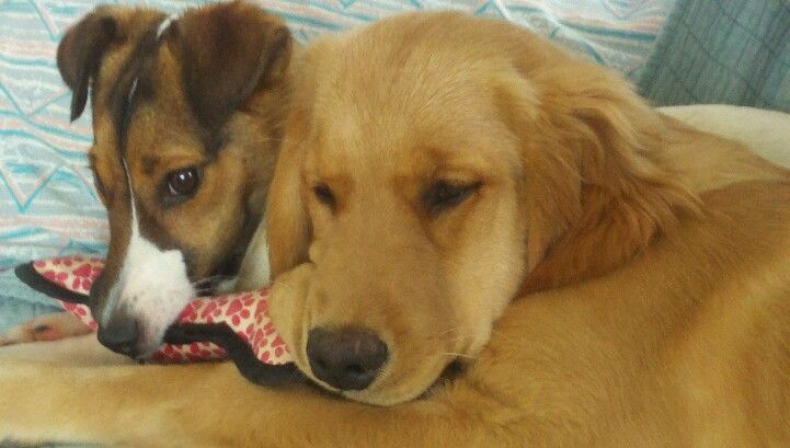 Millie and Karma----Best buddies