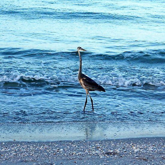 Early Morning Heron Beach Walk I - Manasota Key Englewood ...