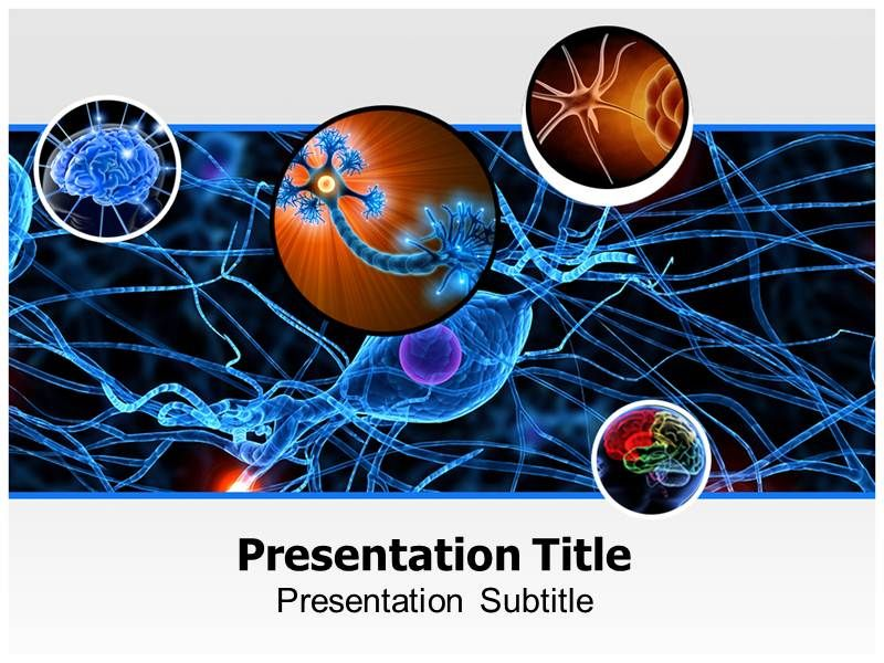 Neurology Powerpoint Template Is Widely Used For Powerpoint