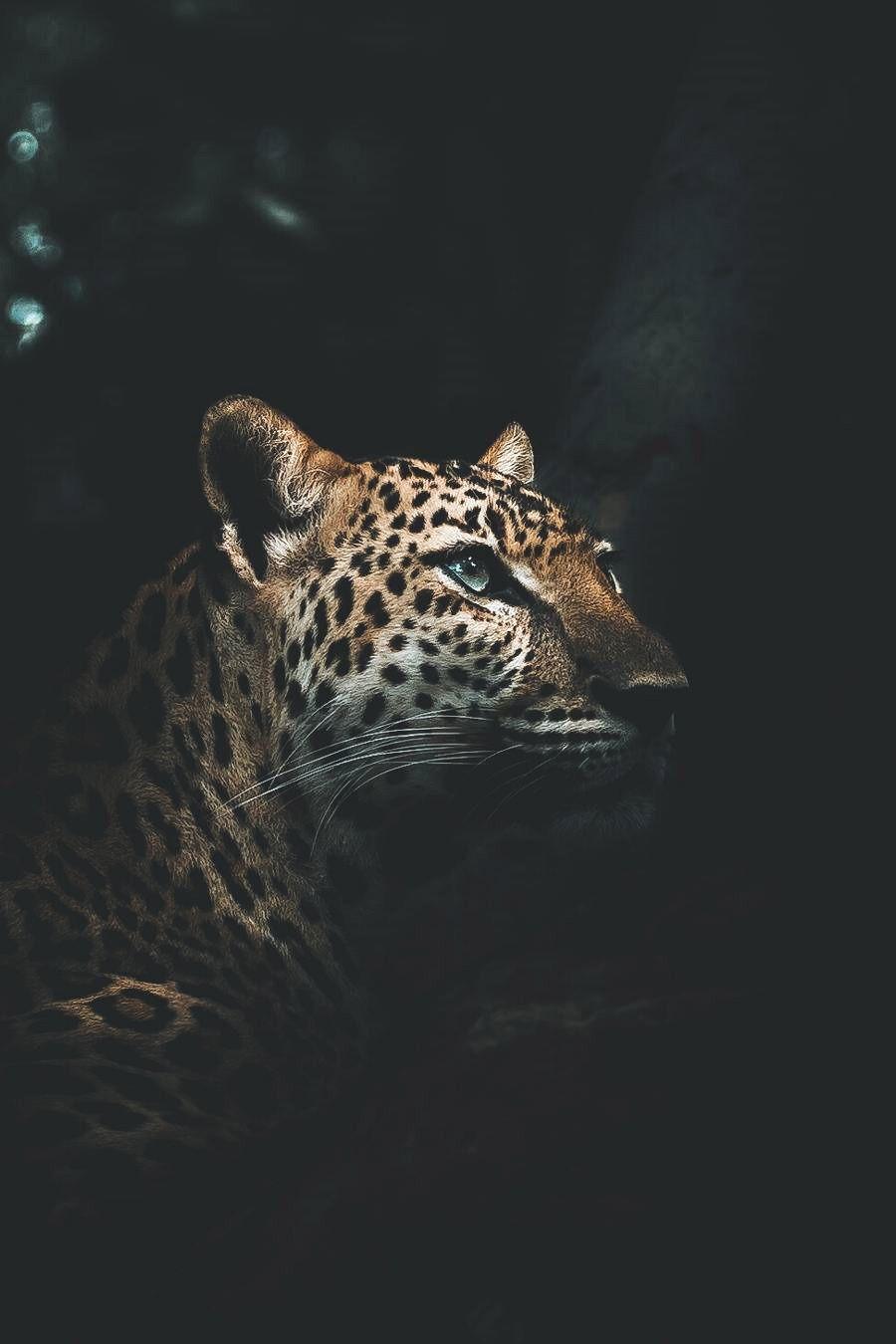 17+ Cool jaguar wallpapers Full HD