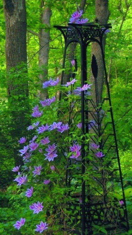 Lovely Trellis Ideas For Clematis Part - 11: Clematis