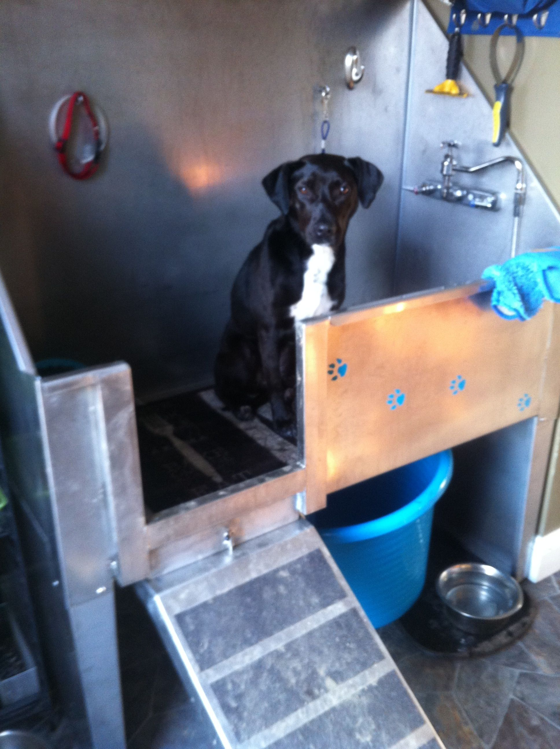 Dog wash foster dog squeaky clean stainless steel tub grooming dog wash foster dog squeaky clean stainless steel tub grooming solutioingenieria Images