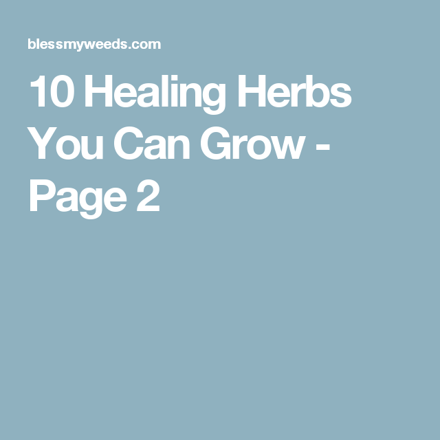 10 Healing Herbs You Can Grow - Page 2