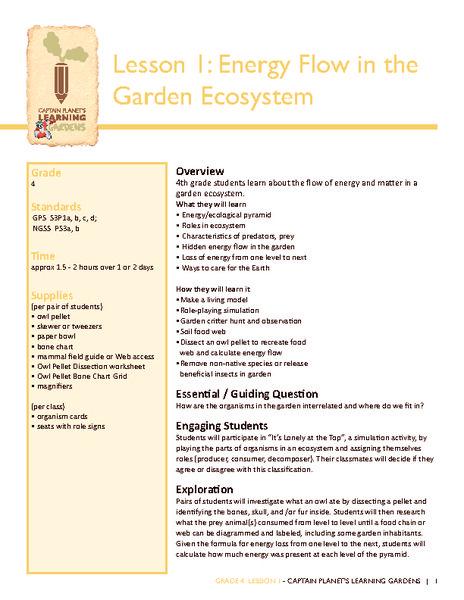 Energy Flow in the Garden